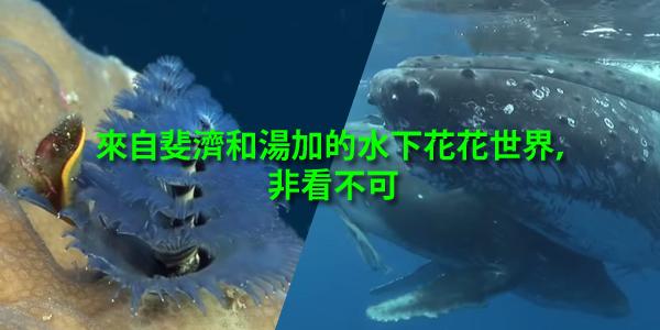 來自斐濟和湯加的水下花花世界,非看不可