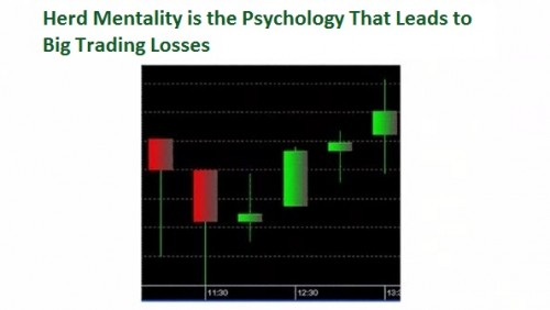 37. Herd Mentality is the Psychology That Leads to Big Trading Losses