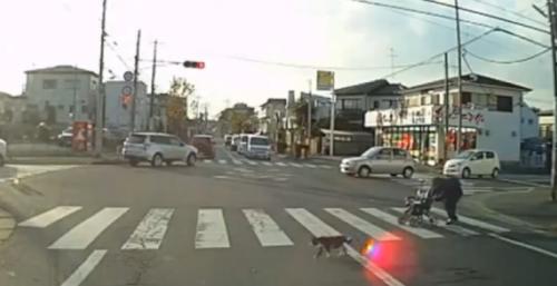換我保護妳!溫柔貓咪引導彎腰奶奶過馬路 - 感動萬人