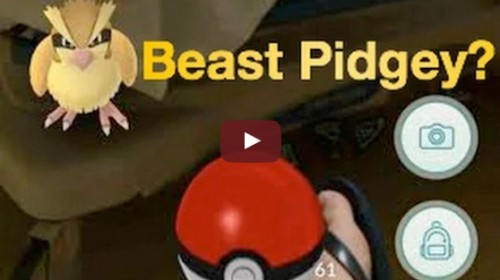 Pokemon Go - How to evolve the BEST Pidgey Pidgeotto Pidgeot