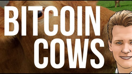 Bitcoin Cash Cows